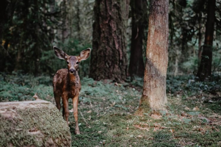 Running Fawn: Talk to Animals and Watch the Amazing Results!