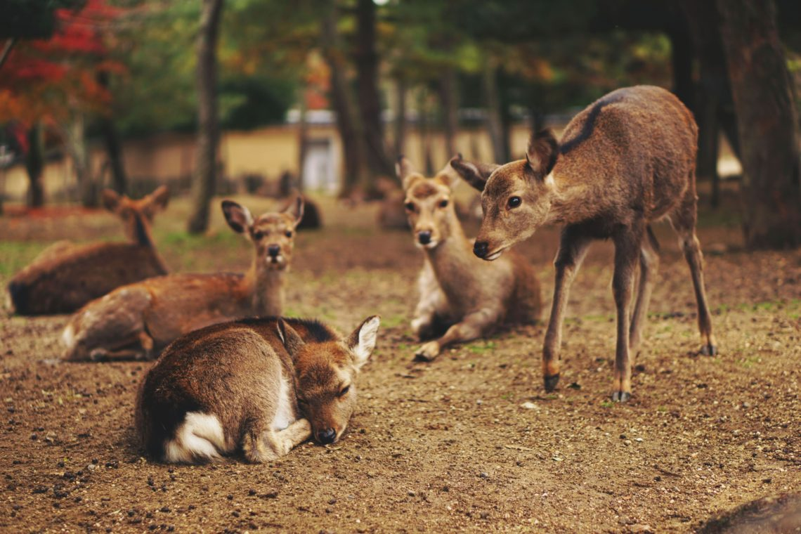 Group of Fawns: Talk to Animals and Watch the Amazing Results!