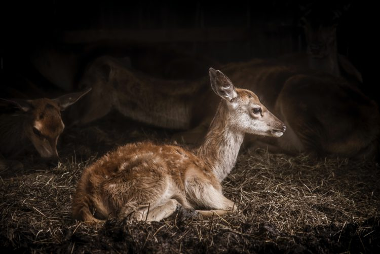 Baby Fawn: Talk to Animals and Watch the Amazing Results!