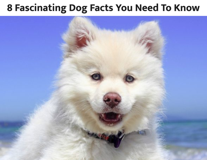 8 Fascinating Dog Facts post