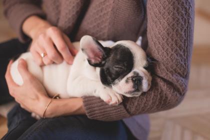 holding dog