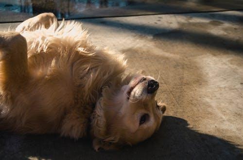 dog seizure symptoms 3