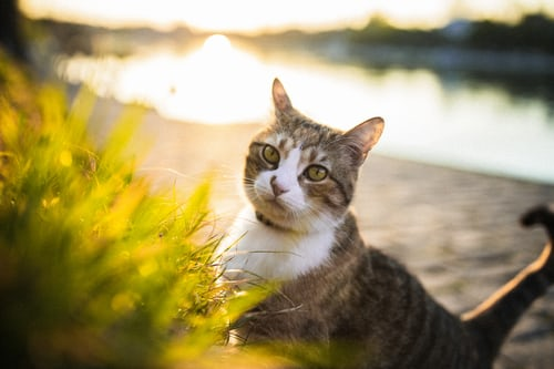new cat corina_rainer unsplash
