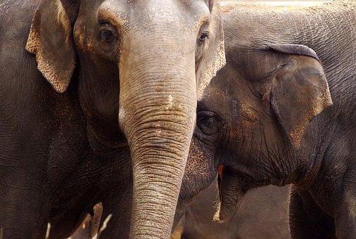 elephants reunited 2