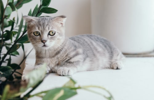 new cat tran-mau-tri-tam unsplash