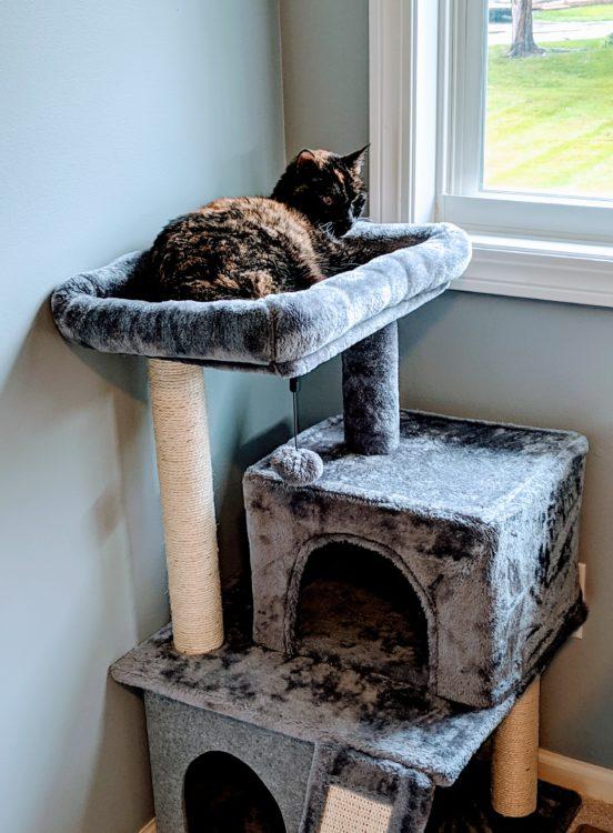 adopting a cat 3