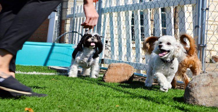 dog day care 2