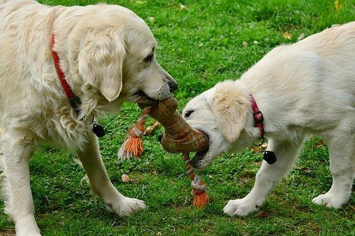 dog day care 3