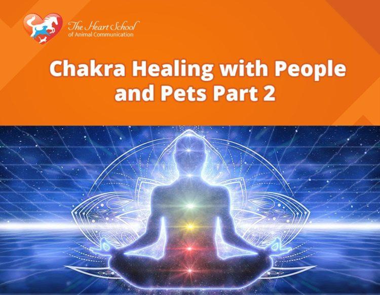 animal chakras 2