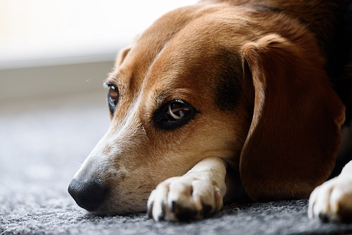 cancer screening for dogs 2