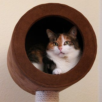 cat caves 2
