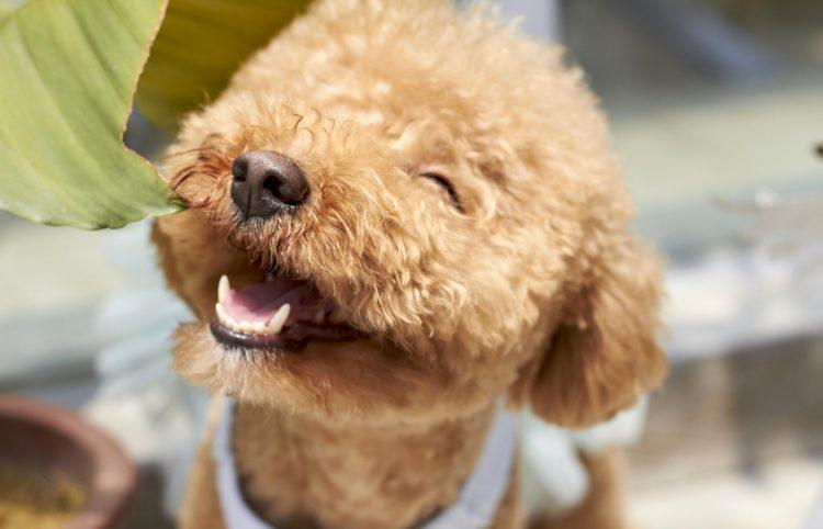 is my dog happy 2