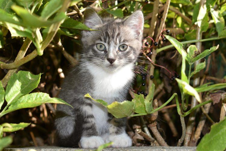 introducing a new cat 3