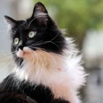 introducing a new cat to your home 2