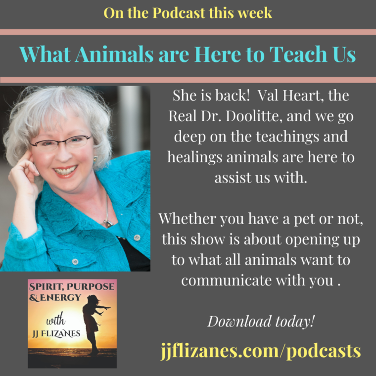 animals as teachers