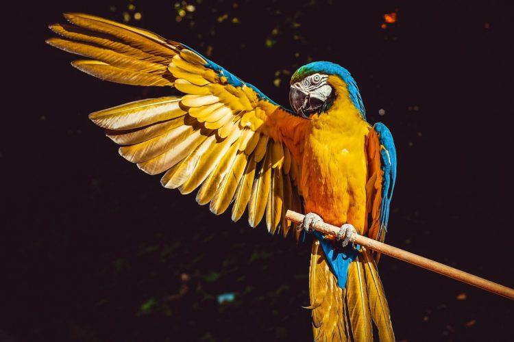 parrot-3601194_1920