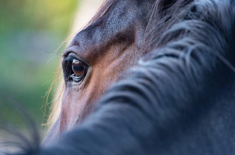 Horse Whispering 2