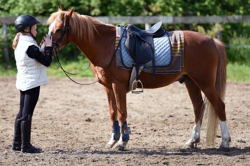 Horse Whispering 3