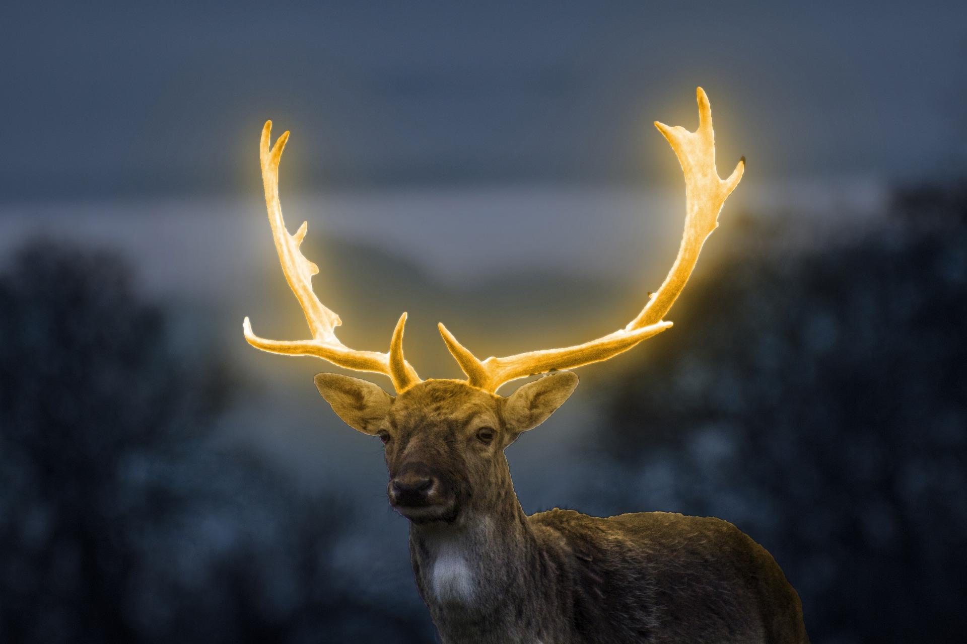animal's aura